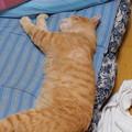写真: 2009年6月13日のボクチン(5歳)
