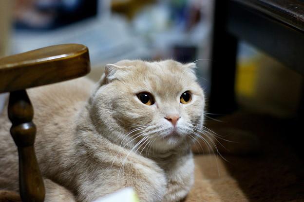 2018年2月8日のスコちゃん(雄5歳)