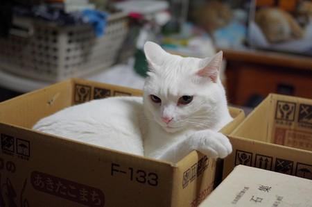 2018年6月17日のシロちゃん(雌5歳)