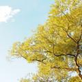 Photos: 西日輝く木々