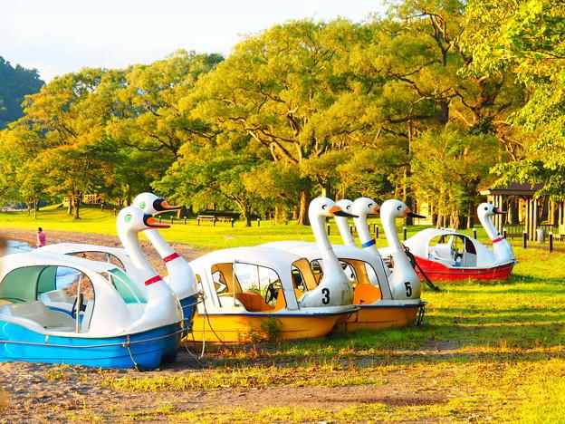 十和田湖スワンボート