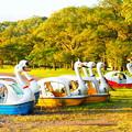 Photos: 十和田湖スワンボート