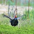 写真: 春、はる、ハル~~♪平等に春は来る^^nabegoroさんに頂きました^^