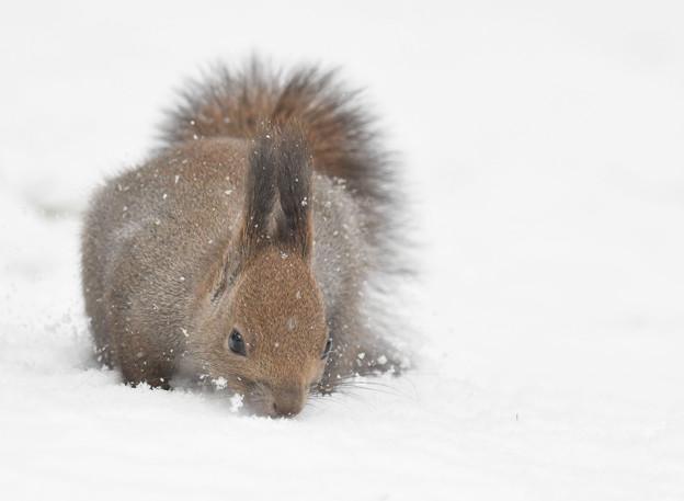 Photos: 雪のお華の髪飾り^^似合ってますか?モンプチさ~んって