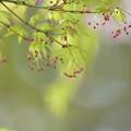 Photos: 春の目覚め、、、