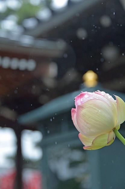 優しい雨が、、、、