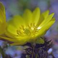 Photos: 春へのゆめ、、、