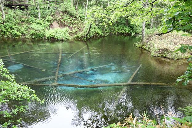 Photos: 雨の神の子池