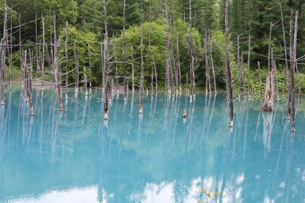 曇りの日の青い池