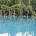 Photos: 曇りの日の青い池