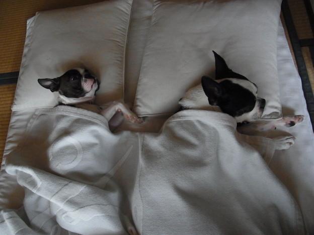 並んで昼寝