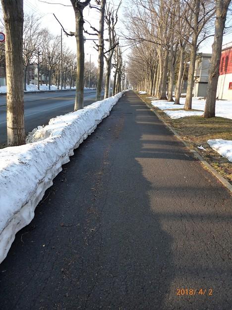 雪解バス道