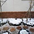 写真: 雪の庭ノーマル