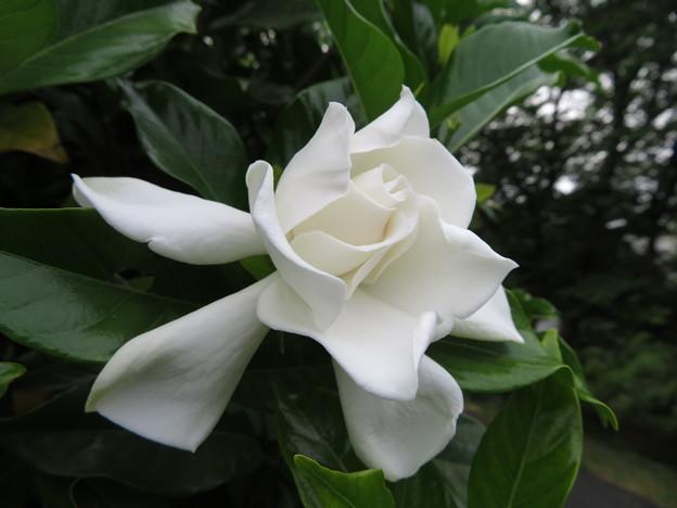 純白の美しさ~