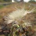 写真: 春にむかって飛べ~