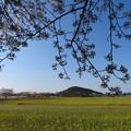 Photos: 残り桜