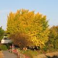 黄葉真っ盛り~