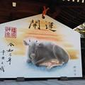Photos: 橿原神宮絵馬