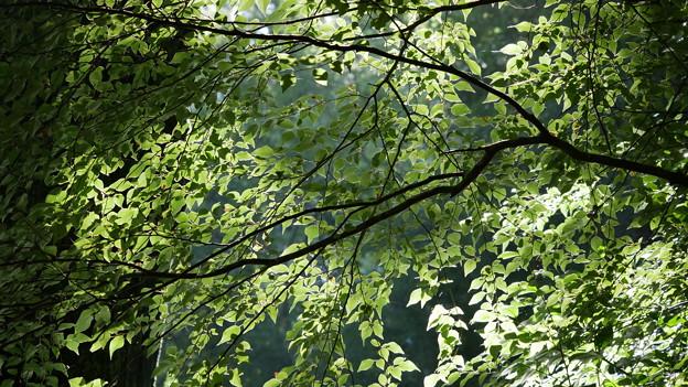 写真: 木漏れ日のプラネタリウム