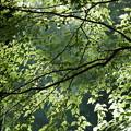 木漏れ日のプラネタリウム