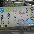 Photos: 名曲クイズ~君に鯉