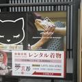 写真: 解説~猫の爆買い