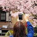 写真: 花見団子
