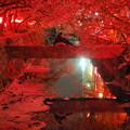 写真: みどり川の桜1