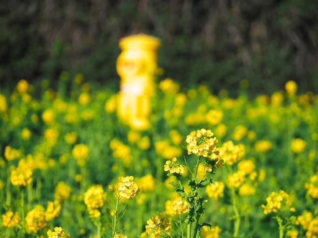 なの花まつり2
