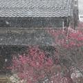 Photos: 雪の近江八幡