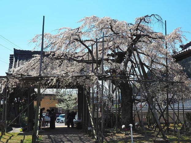 Photos: 宿縁寺1