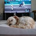 野球より睡眠
