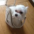 Photos: 袋だいすき