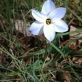 Photos: 春一号