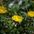 写真: 黄色い花を...