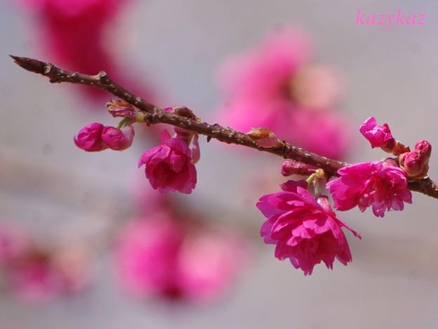 バラ園の樹木<3>