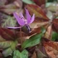写真: 春の妖精