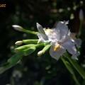 写真: 必撮卯月花