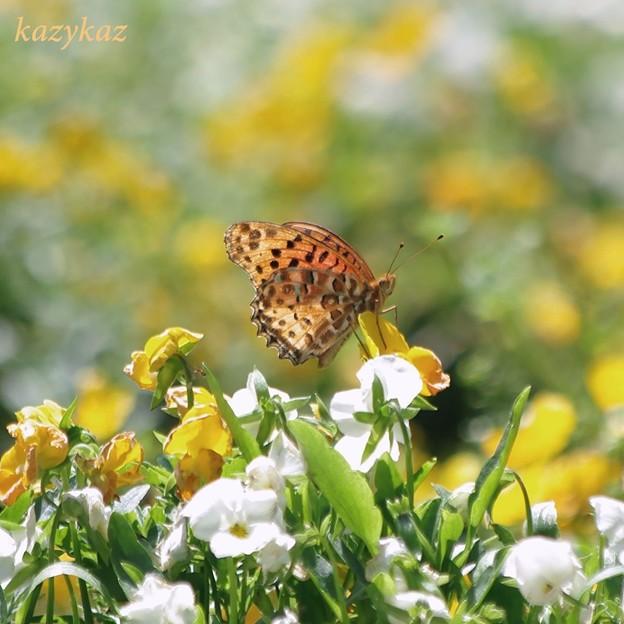 写真: 花とツマオ