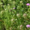 写真: 花も実のうち