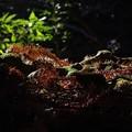 Photos: 地上の藻