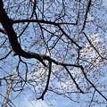 マイ・標本木