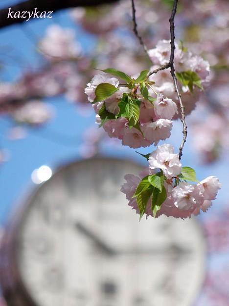 sakuraの時刻(とき)