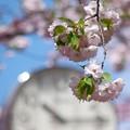 Photos: sakuraの時刻(とき)