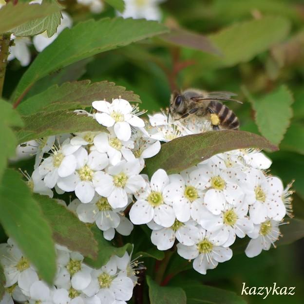 働く蜂さん