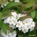 Photos: 働く蜂さん