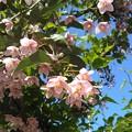 Photos: ピンクの鈴