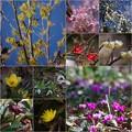 Photos: バラ園の春コラ