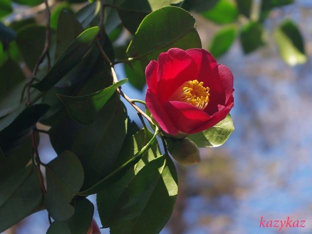 木(きへん)に春(はる)