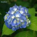 Photos: baby blue